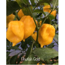 Bhutlah Gold Pepper