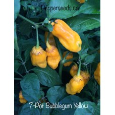 7-Pot Bubble-Gum Yellow Pepper Seeds