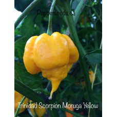 Trinidad Scorpion Moruga Yellow Pepper Seeds