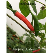 Guampinho Do Veado Pepper Seeds