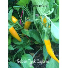 Golden Thick Cayenne Pepper Seeds