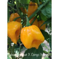 Bahamian Goat X Congo Yellow Pepper