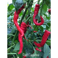 Red Cayenne Pepper Seeds