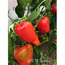 APS 911 Sweet Pepper