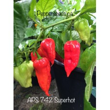 APS 742 Superhot  Pepper
