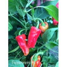 Pepperoncini Pepper Seeds