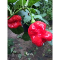 Faces Pepper Seeds