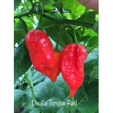 Devils Tongue Red Pepper Seeds