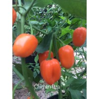 Chichen Itza Pepper Seeds