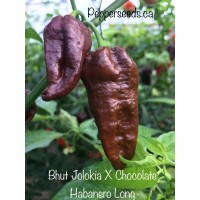 Bhut Jolokia X Chocolate Habanero Long Pepper