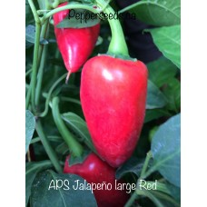 APS Jalapeño large Red Pepper
