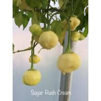 Sugar Rush Cream Pepper Seeds