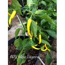 APS Yellow Cayenne Pepper Seeds