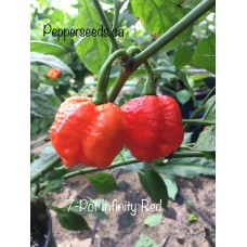 7-Pot Infinity Red Pepper Seeds