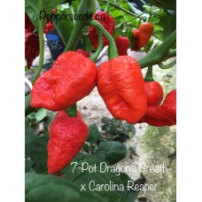 7-Pot Dragon's Breath x Carolina Reaper Pepper Seeds
