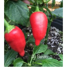 Aji Benito Pepper Seeds