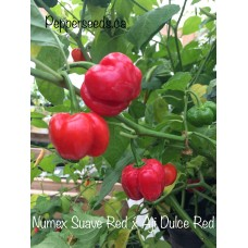 Numex Suave Red x Aji Dulce Red Pepper Seeds