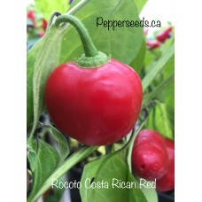 Rocoto Costa Rican Red Pepper Seeds