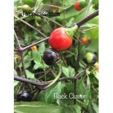 Black Cluster Pepper Seeds