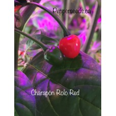 Aji Charapita Red Pepper Seeds