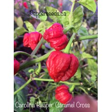 Carolina Reaper Caramel Cross Pepper Seeds