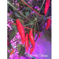 Pimento Oiseau Pepper Seeds