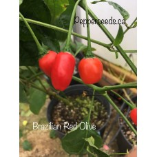 Brazilian Red Olive Pepper Seeds