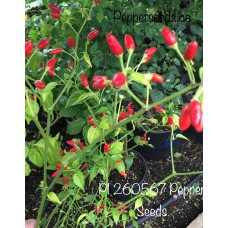 PI 260567 Pepper Seeds