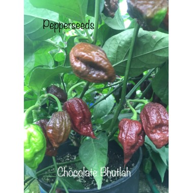 Chocolate bhutlah