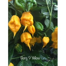 7-Pot Borg 9 Yellow Pepper Seeds