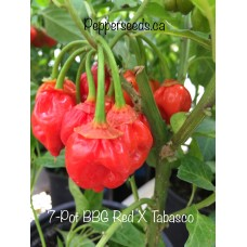 7-Pot Bubble Gum Red X Tobasco Pepper Seeds