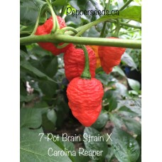 7-Pot Brain Strain X Carolina Reaper Pepper Seeds