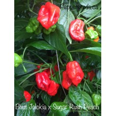 Bhut Jolokia x Sugar Rush Peach Pepper Seeds