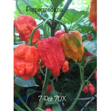 7-Pot 7DX Pepper Seeds