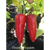 Pimento De espelette Pepper Seeds