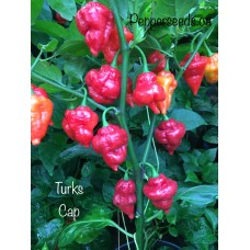 Turks Cap Pepper Seeds
