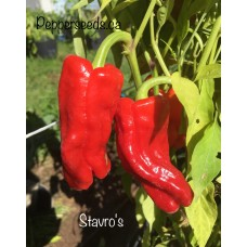 Stavro's Pepper Seeds