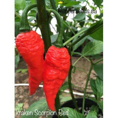 kraken Scorpion Red Pepper Seeds