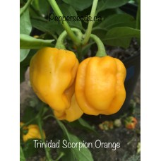 Trinidad Scorpion Orange Pepper Seeds