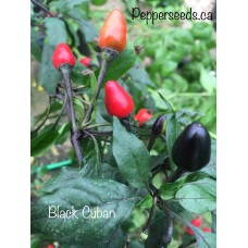 Black Cuban Pepper Seeds