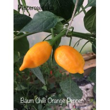 Baum Chilli Orange Pepper Seeds