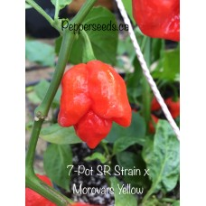7-Pot SR Strain x Morovars Yellow Pepper Seeds