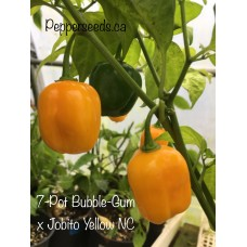 7-Pot Bubble-Gum x Jobito Yellow Pepper Seeds