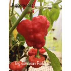 Big Jamaican Red Pepper Seeds