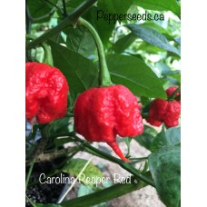 Carolina Reaper Red Pepper Seeds