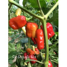 Rio Pejivalle Hot Pepper Seeds