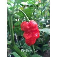 Big Bang Red Pepper