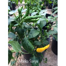 Macka Sarga Pepper Seeds
