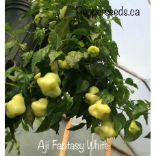 Aji Fantasy White Pepper Seeds
