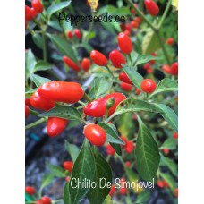 Chilito De Simojovel Pepper Seeds